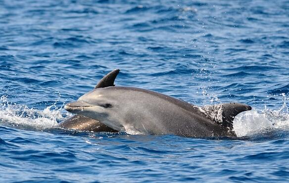 Spotting dolphins while boating in Shell Island
